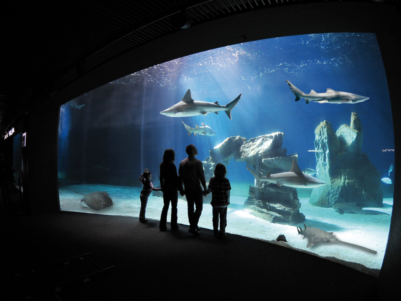 for-msc-meraviglia-guests-go-behind-the-scenes-on-an-exclusive-tour-at-italy-s-largest-aquarium-4.jpeg