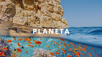 sustainability-report-banner-planet-square-format-br.jpeg